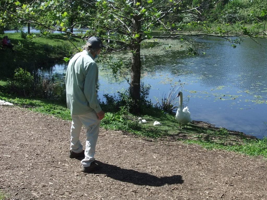 白鳥と交流